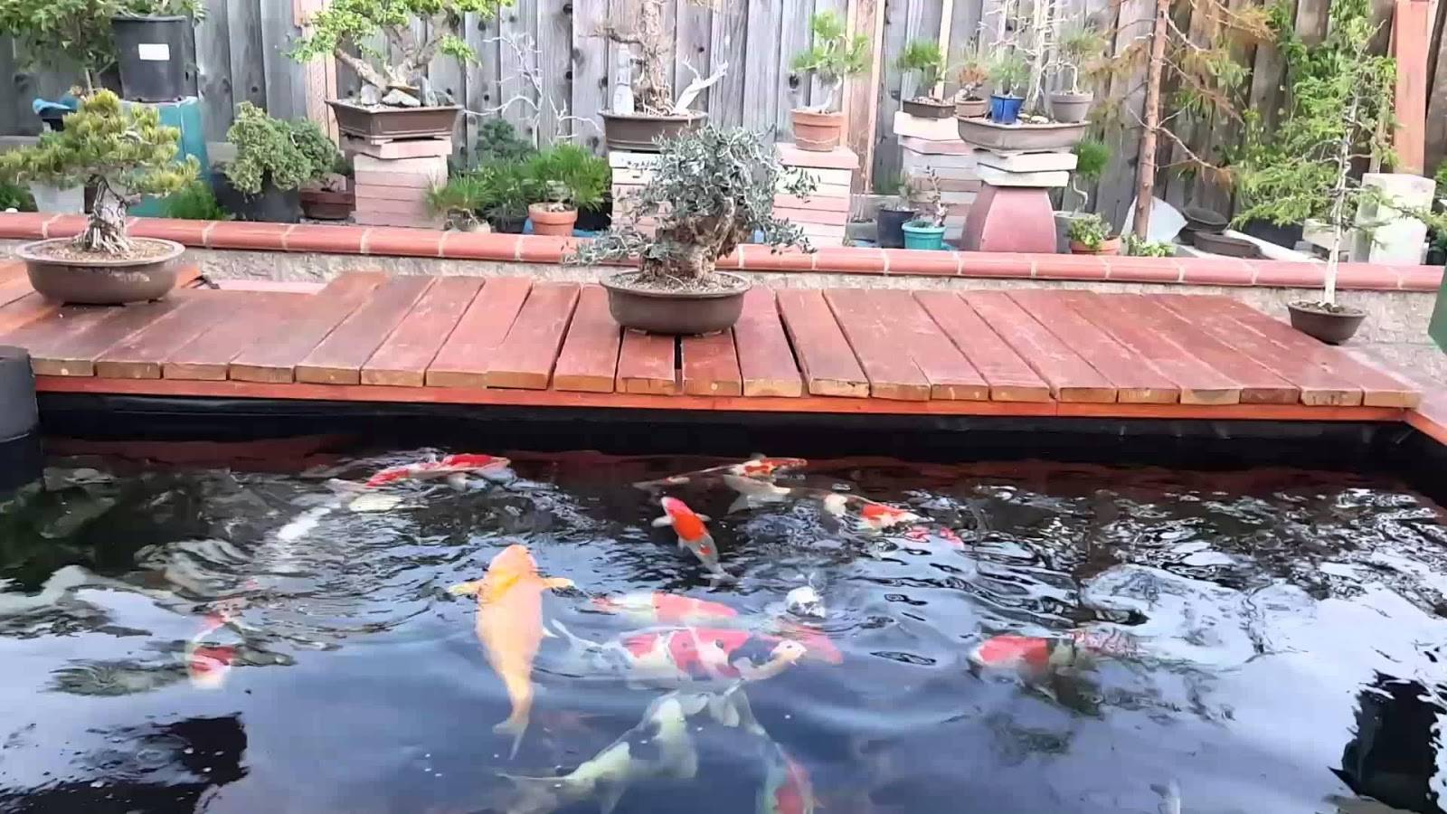 Top 10 địa chỉ thiết kế hồ cá koi đẹp tại Tphcm
